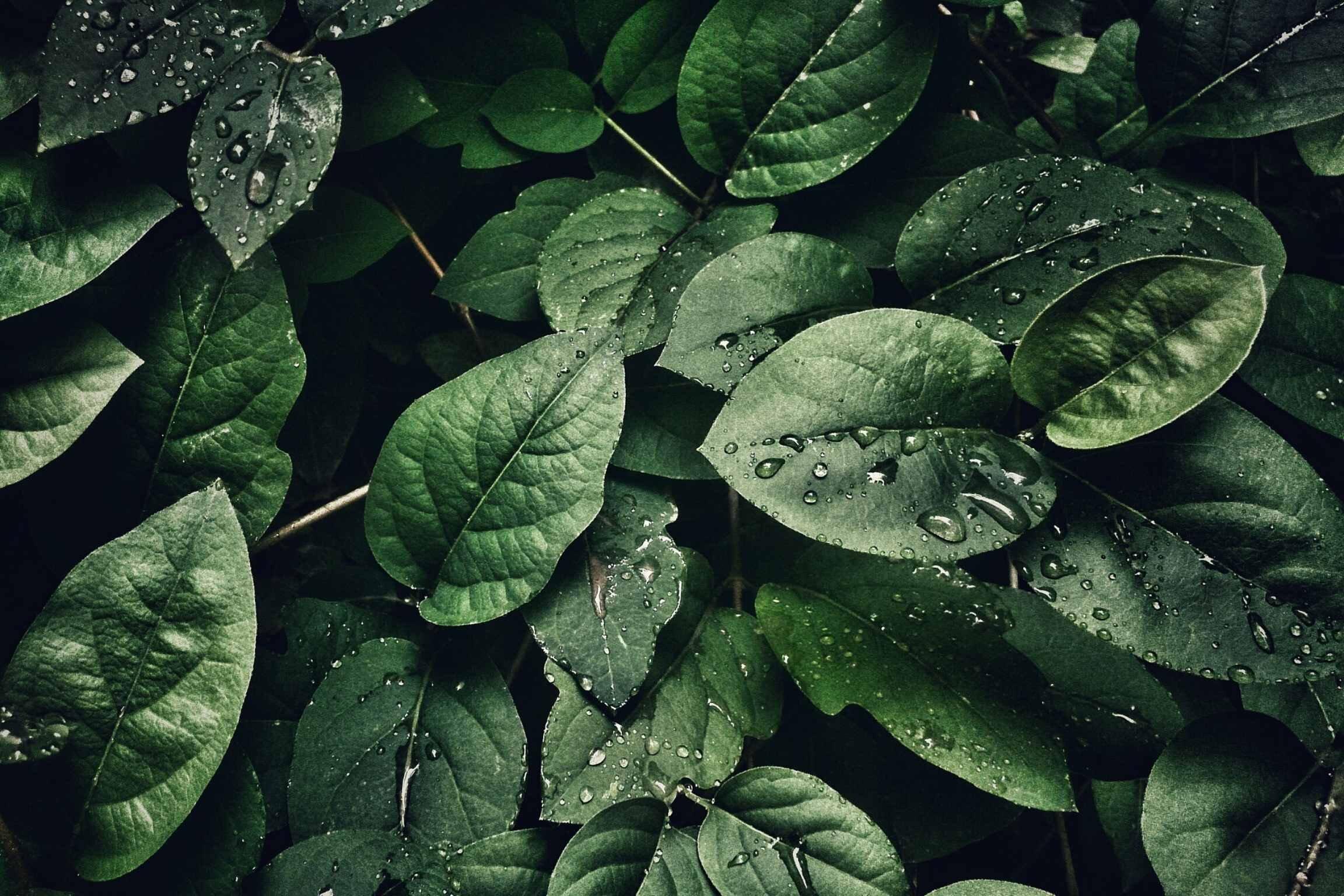 ekogość-ecohotel-oszczędzanie-ochrona środowiska
